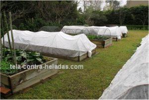 manta térmica en cultivo de invernadero