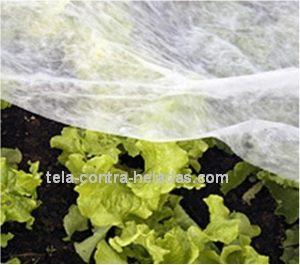 tela térmica en cultivo de hortalizas