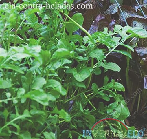 Cultivos protegidos con la malla térmica de Invernavelo.