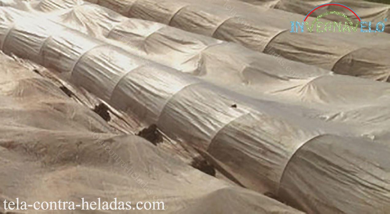 micro túneles invernavelo brindando protección perfecta para tus cultivos.