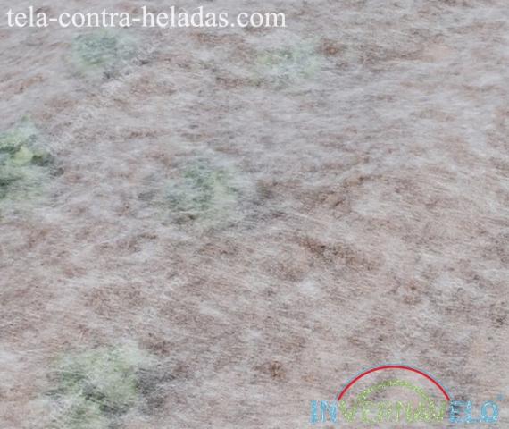 tela térmica Invernavelo protegiendo cultivos en campo
