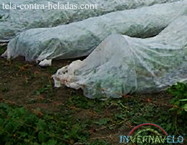 micro túneles invernavelo instaladas en campo de cultivos.