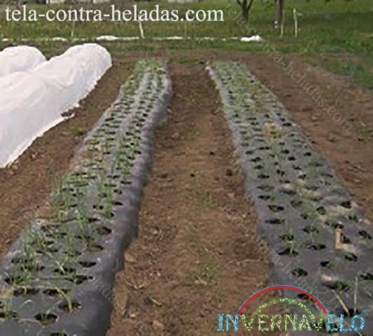 Invernavelo y Ground cover, entutorando y protegiendo cultivos.