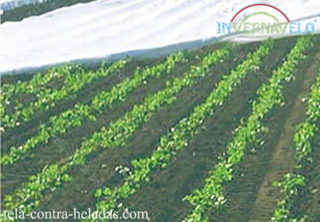 Instalación de la manta térmica Invernavelo en campo de cultivos.